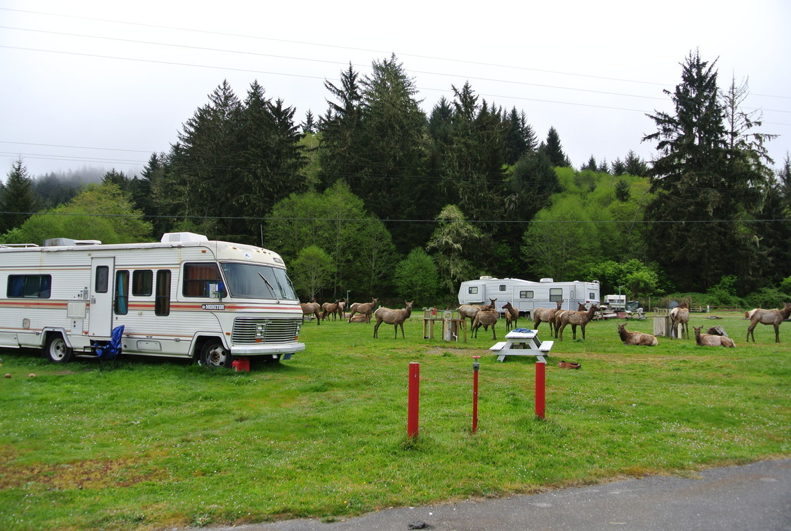 Welcome to Elk Country Rv Resort and Campground